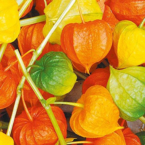 Papierservietten - Servietten Lunch/Party/ca. 33x33cm Herbst - Autumn - Lampion - Halloween