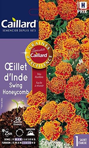 Caillard PFCA20805 Graines de Oeillet d'Inde Swing Honeycomb