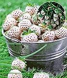 BALDUR-Garten Weiße Ananas-Erdbeere...