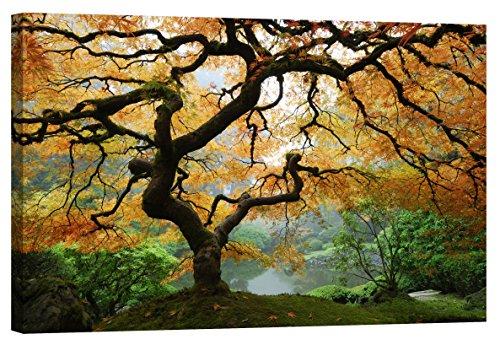 fototapete nachleuchtend Wandbilder Startoshop, nachleuchtende Leinwandbilder oder selbstklebende Fototapete, Wandsticker, Ahorn in Herbst Wandbild, Kategorie Natur, 60 cm x 90 cm