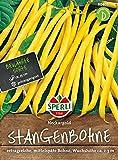 Bohnen - StangenBohnen - Neckargold von Sperli-Samen