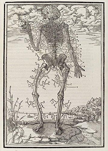 Vintage Anatomie, Menschliches Nervensystem, 16. Jahrhundert aus Estienne's Anatomy, 250 g/m² glänzender Kunstdruck A3