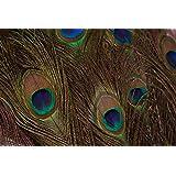 Plumas de pavo real,  disponible en pack de 10–90cm,  boda,  manualidades decoración