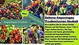15x Regenbogen Trauben Bunt Samen Saatgut Pflanze Rarität ObstNeuheit #140