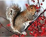 Wowdecor DIY Malen nach Zahlen Kits Geschenk für Erwachsene Kinder, Malen nach Zahlen Home Haus Dekor - Eichhörnchen Rot Weißdorn Obstbaum 40 x 50 cm Rahmen