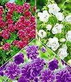 BALDUR-Garten Kollektion Winterharte Geranien Stauden Sortiment, 6 Knollen Geranium himalayense von Baldur-Garten bei Du und dein Garten