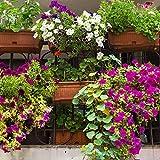 Balkon Pflanzen Mix Samen