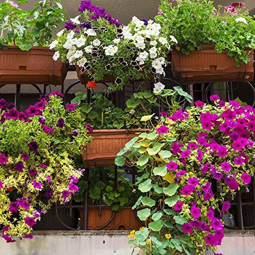balcon Plante Mélange graines