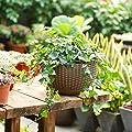 Mackur Hängend Blumentopf Hanging Sphere Hängekette Pflanzampel Hängeampel Hängetopf Hängepflanztopf hängenden Pflanzenkorb 1 Stück von Mackur - Du und dein Garten