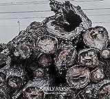 David Doruzka: Jaromir Honzak: Early Music (Audio CD)