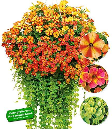 Hängende Farben Blume