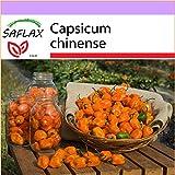 SAFLAX - Chile habanero amarillo - 10 semillas - Capsicum chinense