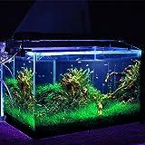 Amzdeal Lámpara acuario con Multicolor mando a distancia RGB LED Subacuático, luces Impermeable Aquarium y estanques, 5050 lúmens 73-94cm 108LED, Color de luz blanco + RGB