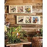 Cape Handwerker 6W5289Evergreen Birke Holz Vintage Vogel Wand Schilder (Set von 2)