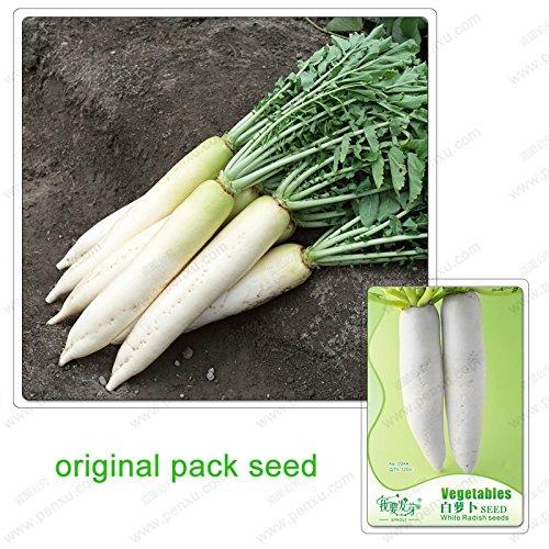 120 graines/Paquet, graines blanches Radis, Radis légumes, Jardin, plante en pot Balcon graines de légumes