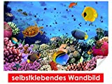 XXL-Tapeten selbstklebendes Wandbild Coral Field – leicht zu verkleben – Wallprint, Wallpaper, Poster, Vinylfolie mit Punktkleber für Wände, Türen, Möbel und alle glatten Oberflächen von Trendwände