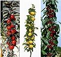 """3er Set Säulenobst, Apfel """"Rotbäckchen"""", Kirsche Viktoria, Nashi, je 1 Stück von Dominik Gartenparadies auf Du und dein Garten"""