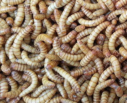 Mehlwürmer, lebend, 1 kg