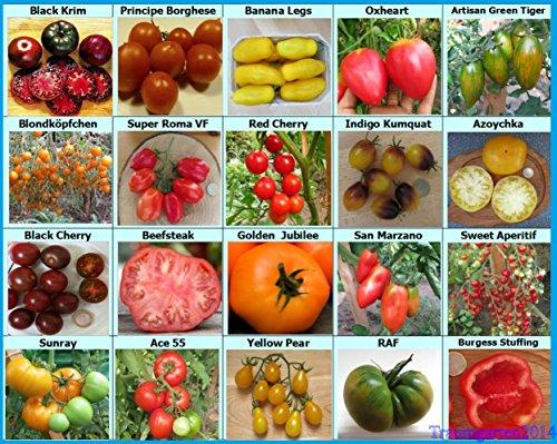 traumgarten2014-tomaten-set-1-fleischtomate-cherrytomate-cockteiltomate-rispentomate-20-historische-