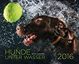 Hunde unter Wasser 2016: Wandkalender