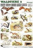 Schreiber Naturtafeln, Waldtiere