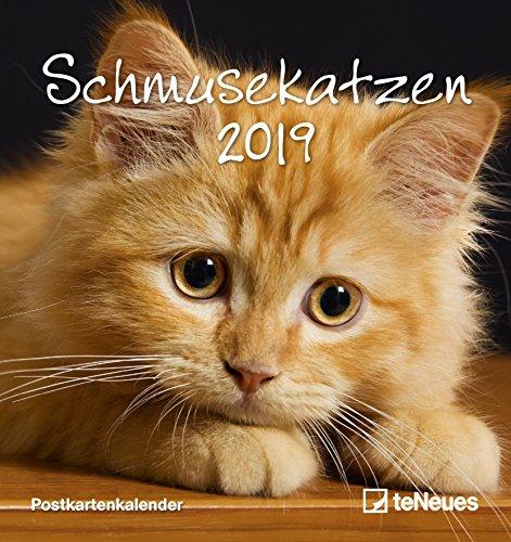 Schmusekatzen 2019 - Postkartenkalender, Tierkalender, Katzenkalender 2019 - 16 x 17 cm