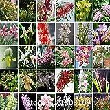 . Seltene Cypripedium Samen Balkon paphiopedilum Samen Pantoffel Orchidee Samen viele Sorten - 100 Stück Bonsai Samen