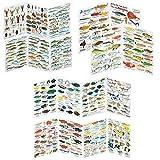 Fischfaltblatt Fischbestimmungskarte Faltblatt zur Fischbestimmung Mittelmeer, Süßwasser, Rotes Meer, Karibik, Ostsee