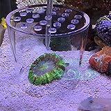 #3: CGT Aquarium Lps Coral Feeder Cover Protect Brachial Trachyphyllia Food Prevent Fish Tank Marine Fish (15cm)