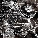 Feeling at Home-Kunstdruck-Wei§-Trompete-Blumen-cm81x81-Poster-fuer-Rahmen