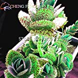 100 seeds Kalanchoe potted plants saplin...