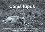 Canis lupus (Wandkalender 2018 DIN A2 quer): Impressionen in schwarz-weiss aus dem Leben der Wölfe (Monatskalender, 14 Seiten ) (CALVENDO Tiere) [Kalender] [Apr 01, 2017] Di Chito, Ursula