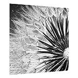 Bilderwelten Spritzschutz Glas - Pusteblume Schwarz & Weiß - Quadrat 1:1 59cm x 60cm