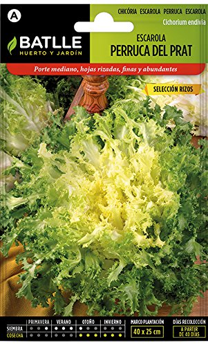 Batlle Gemüsesamen – Endivien Escariol Salat Bubikopf – Perruca del Prat (7200 Samen)