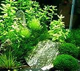 Nano 7, Aquarien Pflanzen Set, Nanoaquarium 20-30l