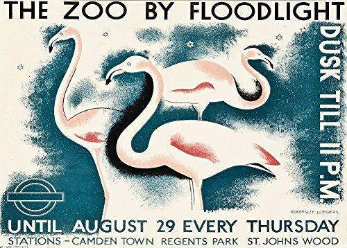 Vintage London Underground The Zoo von Flutlicht über Camden Town Regent 's Park und St. Johns Holz C1928250gsm, Hochglanz, A3, vervielfältigtes Poster