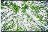 Mznm 3D 3D Tapete Deckenleuchte Tapete Wandmalereien Beautiful Rein und Frisch und Birke Deckenleuchte Fresken Decor Wand Tapete 200x140cm