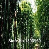 envío libre 200pcs de semillas de bambú gigantes frescas para el jardín de DIY semillas de árboles Hogar