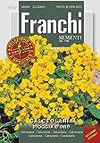 Pantoffelblume Pioggia D'Oro von Franchi Sementi