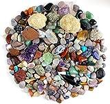 Dancing Bear's Rocks and Minerals Rock & Mineral Kit de Recogida con el Kit Actividad 2 DE ruptura fácil geodas