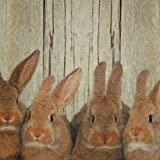 waschbare Fußmatte Hasen – Kaninchen Familie – Küchenmatte Türmatte - 2