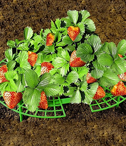 Lot de 5 reifer, fraises
