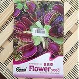 BESTIM INCUK - 40pcs/bolsa de semillas Slurperon con instrucciones