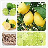 #1: Bonsai Suitable Fruit Seeds : Gandharaj Lemon Plant Seeds Fruit Seeds Dwarf Bonsai Suitable Fruit Seeds Pack By Creative Farmer