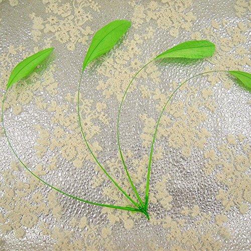 /17,8cm lose Stripped Coque Federn für Mode Hüte Borte Fascinator Craft Dekorieren Dancing Kostüm macht 25 Teile Pea green #54 ()