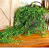 #5: Ocamo Artificial Flower Vine Hanging Garland Plant Fake Weeping Willow Wall Home Garden Decor Floral Wedding Decoration
