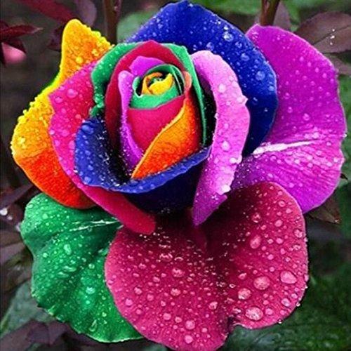 50 graines / pack Rainbow Rose semences, 25 différentes couleurs Rare Rose, Belle rose Bonsai plantes Semences pour la maison et le jardin