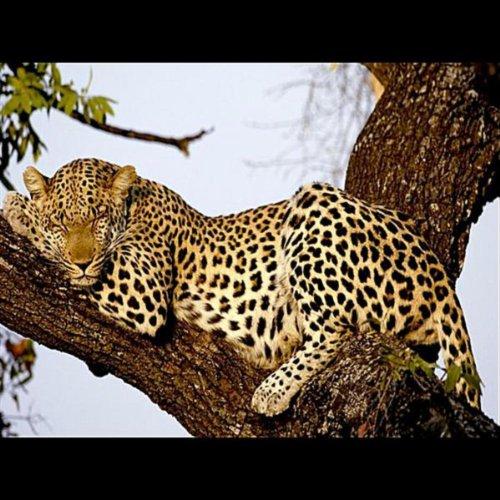 Can a Leopard Change its Spots? / Living Sober Sucks Raw-Cast [Explicit]