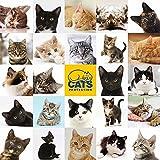 Cats Protection - Katzenpuzzle - Puzzle - 1000 Teile