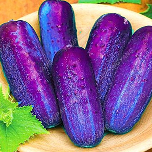 50pcs / paquet de graines de concombre rares délicieux fruits santé vert concombre Graines de légumes frais non-OGM Bricolage Ferme jardin Graines Concombre